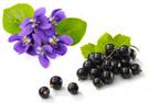 parfum-cassis-violette